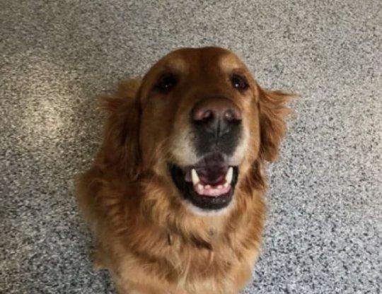 happy dog on epoxy flooring